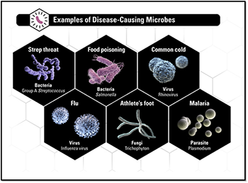 Examples of Disease-Causing Microbes
